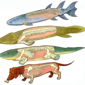 When Fish Got Feet, When Bugs Were Big and When Dinos Dawned, a Cartoon Prehistory of Life on Earth